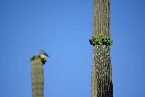 soapconf14 random cacti
