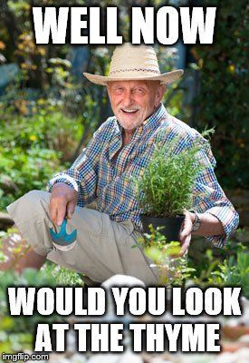 Meme with friendly gentleman gardener holding thyme that reads Well now, would you look at the thyme.