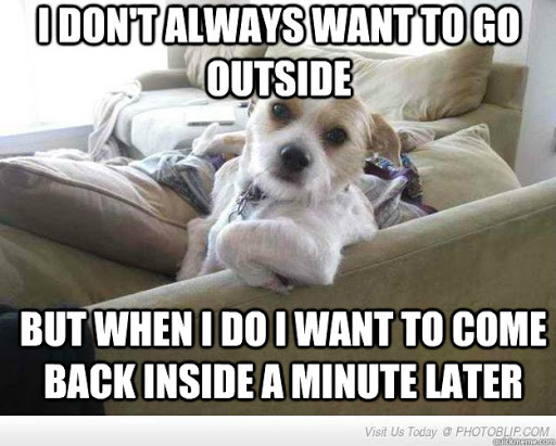 Meme with dog sitting on couch: I don't always want to go outside, but when I do I want to come back inside a minute later.